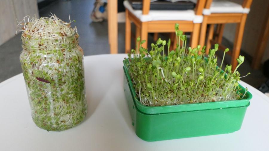 Kiemen Kweken – voorDummies